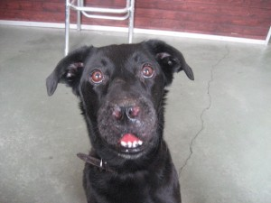 This is a picture of Yvette on the first day she came into the clinic, March 2007